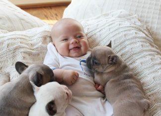 Новородено бебе и домашен любимец