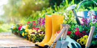 Най-красивите летни градински цветя